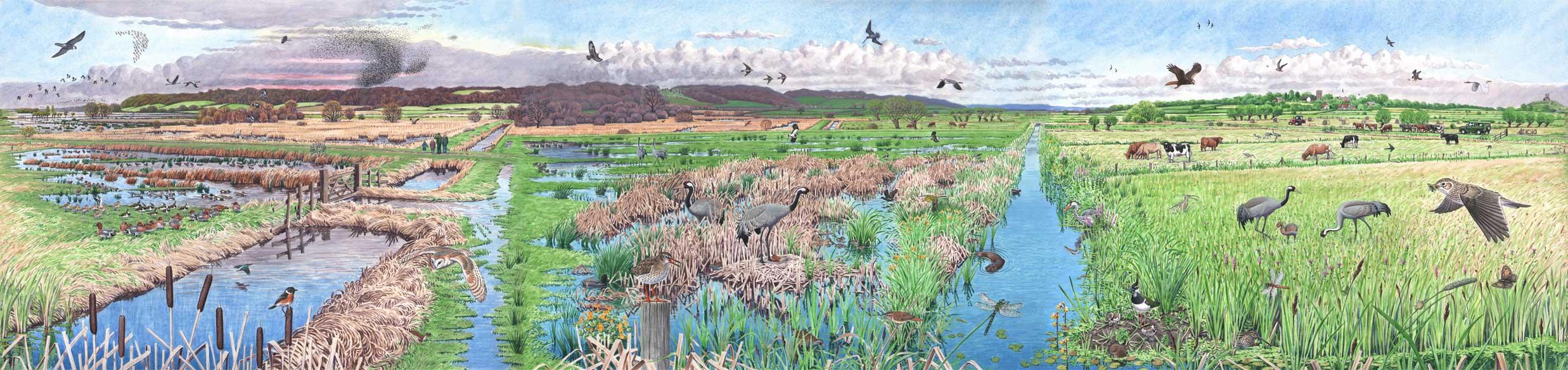 The Crane Landscape