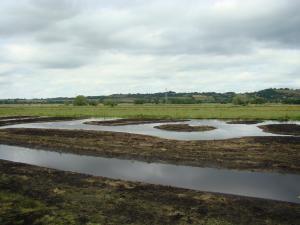 Creating new wetland habitat, Somerset.
