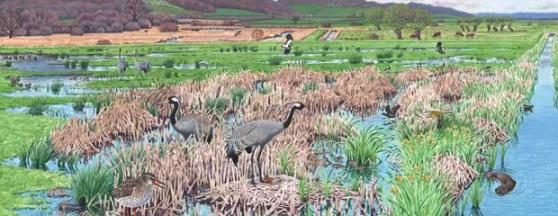 Discover the Crane Landscape
