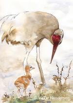 Greater sandhill crane feeding chick