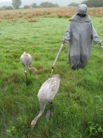 Out foraging with mum - Sep 2010