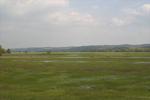 view of the marses of the Oder