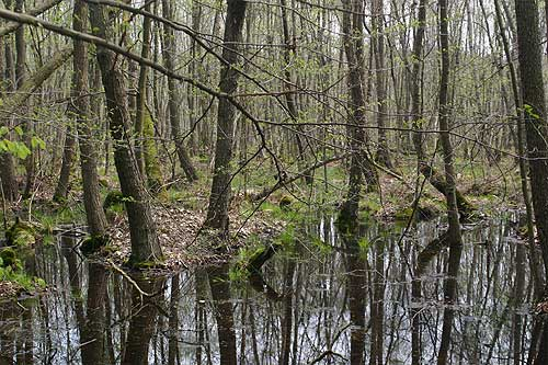 view of the swamp